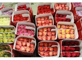 500 Роз Микс  Эквадор
