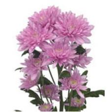 """""""Calabria Pink"""" кустовая"""