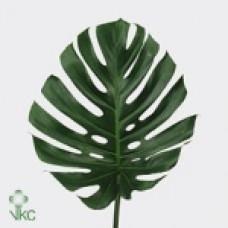 Монстера листья малые, средние, большие