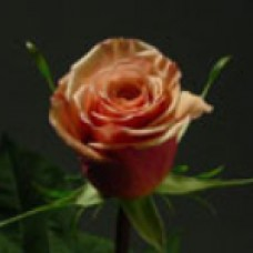 Caramel (Карамель)