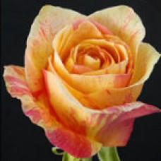 Marmalade (Мармелада)