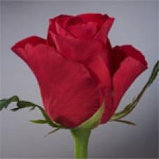 Red Wow (Ред Вау)