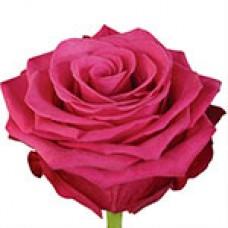 Roseberry (Розбери)