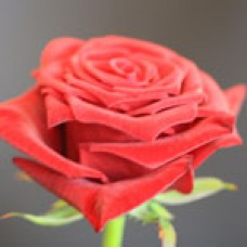 Ruby Red (Руби Рэд)