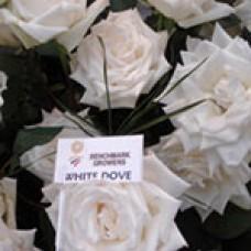 White Dove (Уайт Дав)