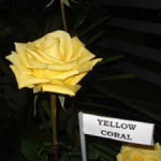 Yellow Coral (Йеллоу Корал)
